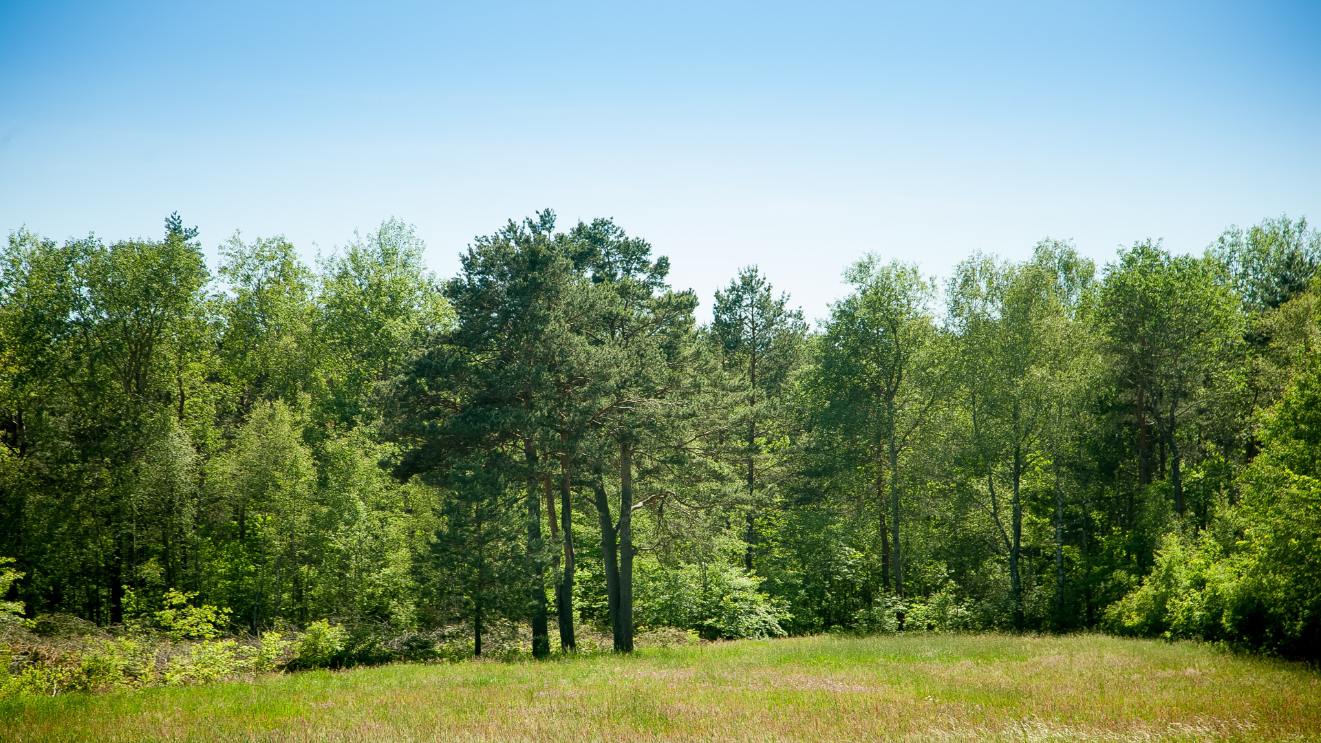 Medio Rural destinara cuatro millones para proyectos de ordenacion de montes.1920
