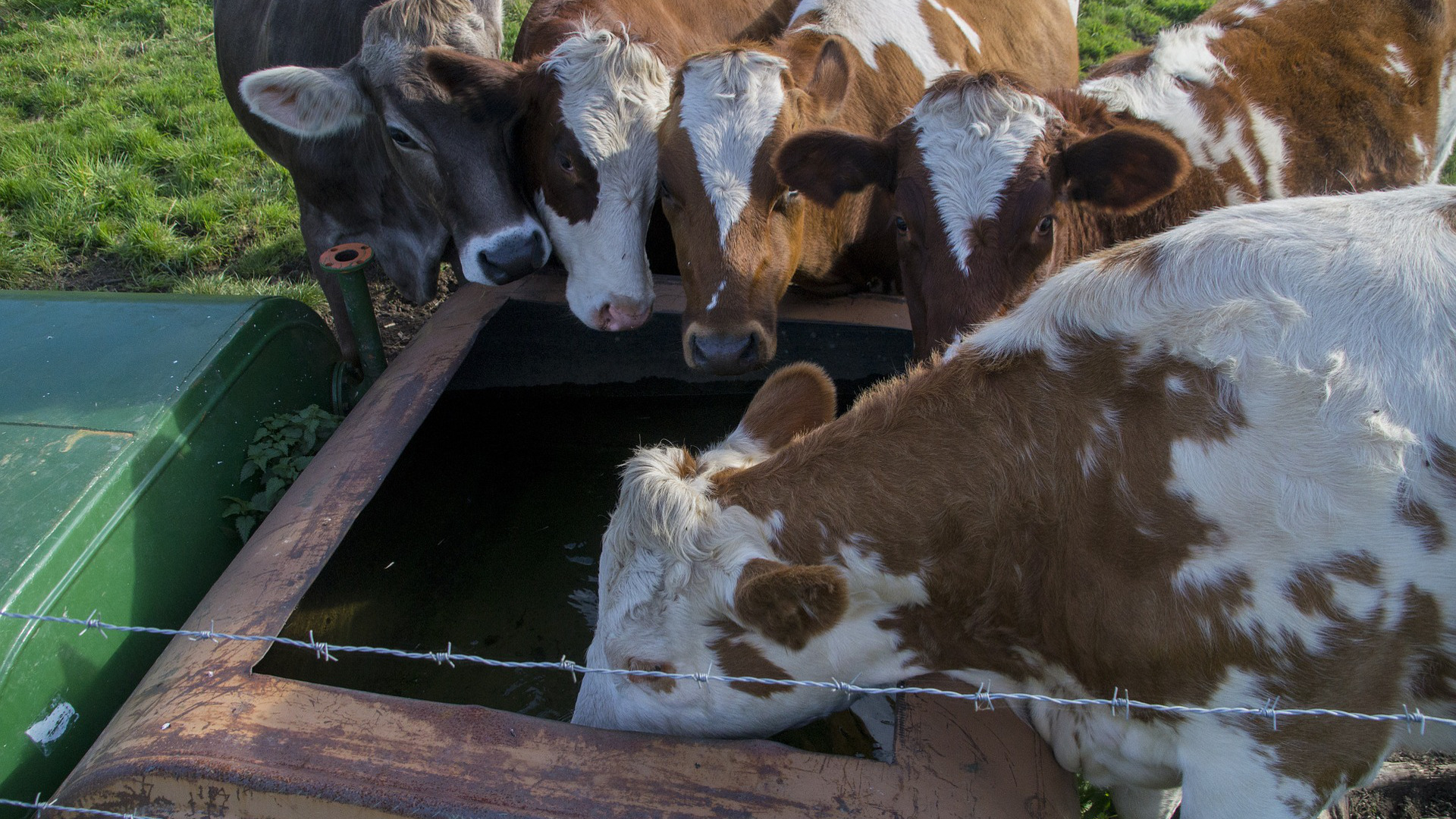 beneficiarios-de-las-ayudas-para-el-suministro-de-agua-a-las-ganaderias-1920