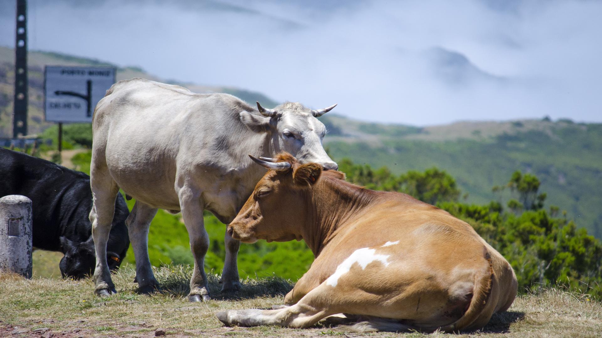 Medio Rural convoca las ayudas de compensaciones por inactividad y para reposición del ganado.1920