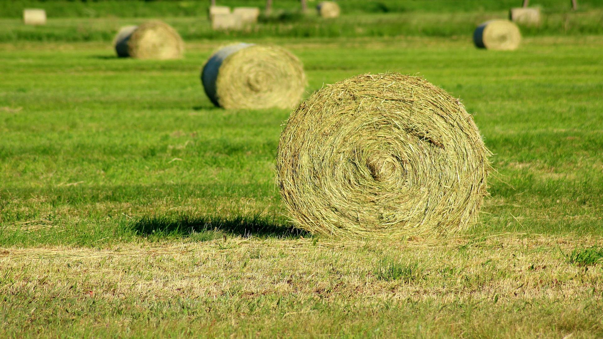 El Fondo Español de Garantia Agraria hizo publico estos dias el listado de beneficiarios de las ayudas de la Política Agraria Comun (PAC) en el 2017.1920