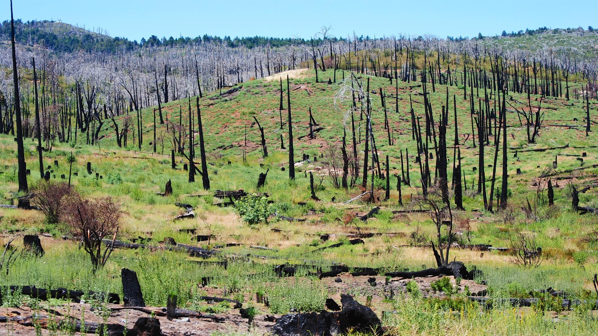 Cosas que hay que cambiar en la política forestal contra incendios 1920