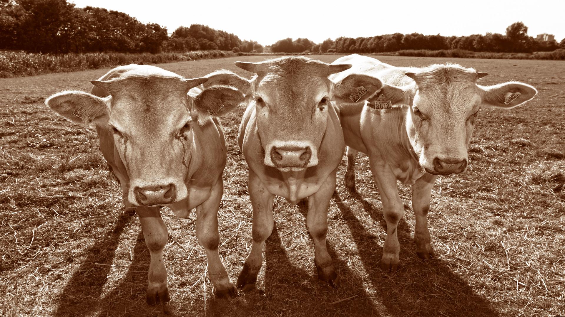 Los ganaderos no deben comprar medicamentos sin receta y menos decidir los tratamientos1920