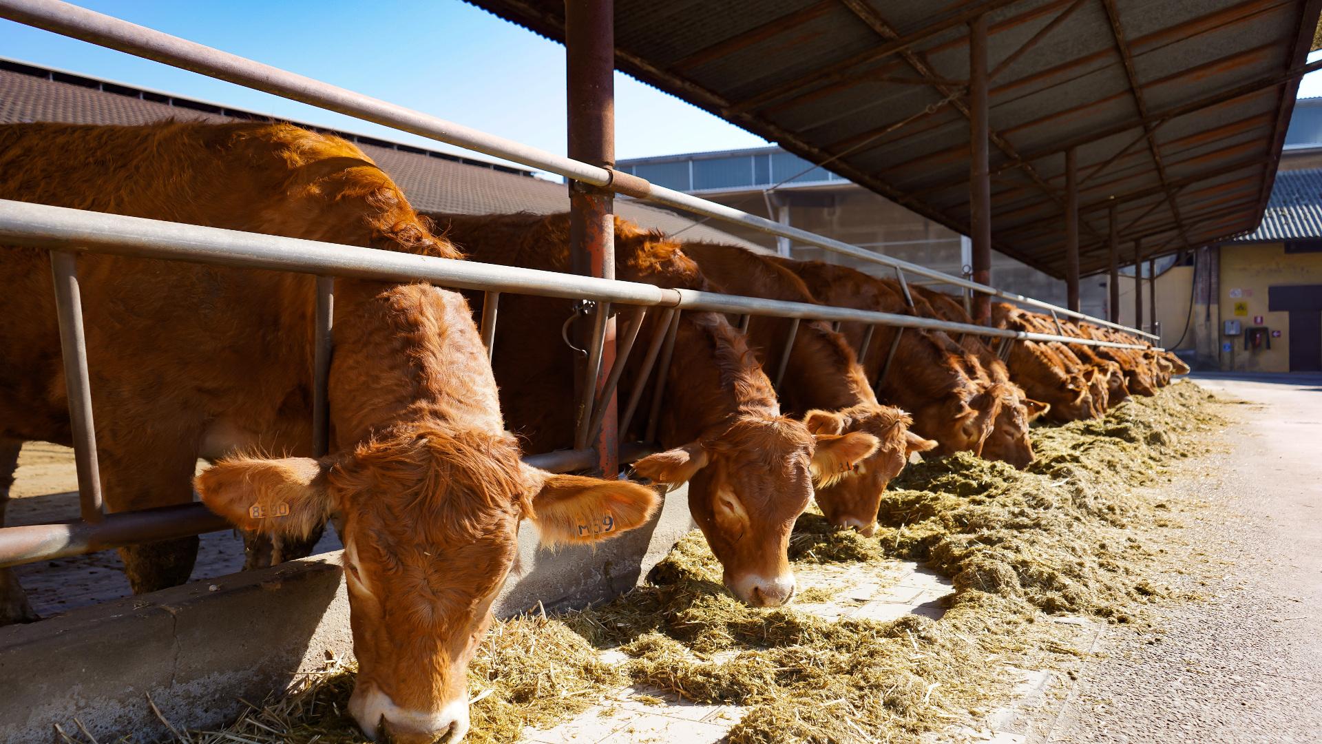 Cambios en la normativa de las ganaderias de leche ecologico1920