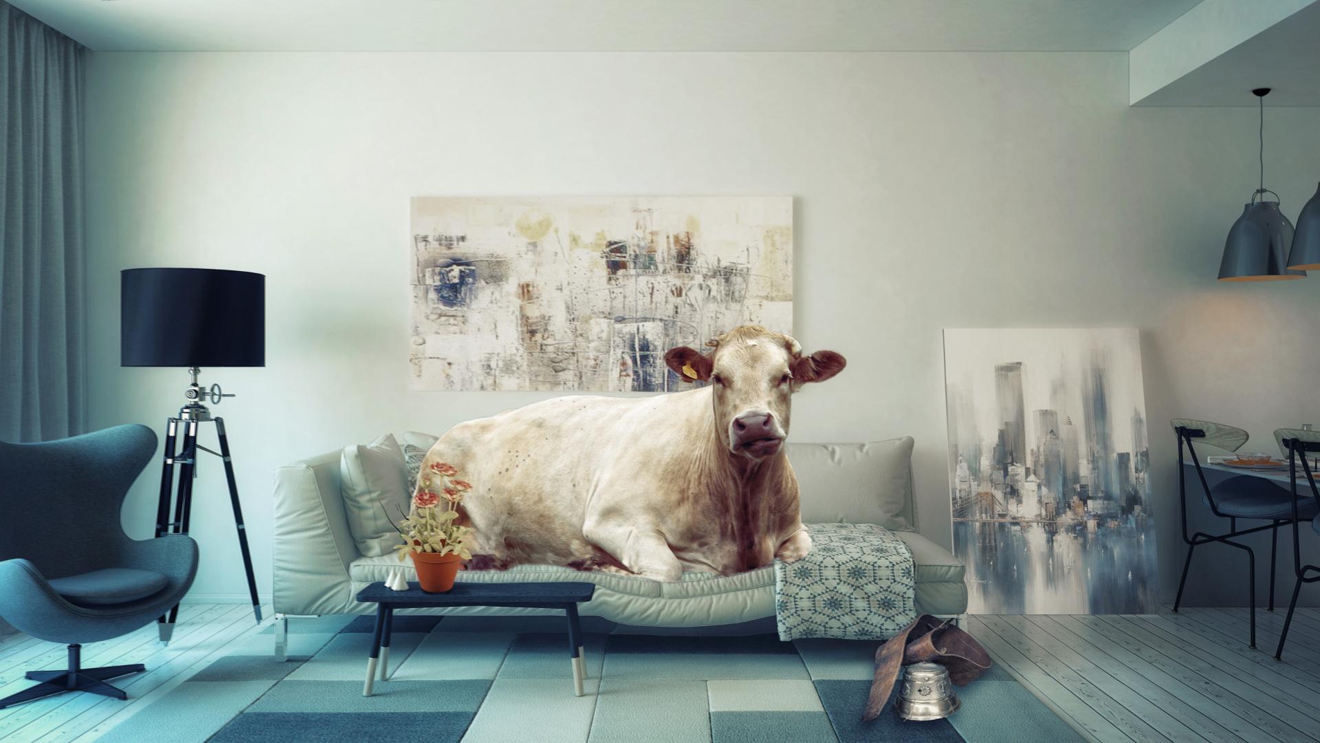 Las vacas que mas producen no son las que más comen sino las que más descansan.1920