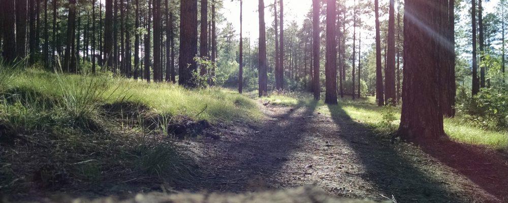 El decálogo básico para la prevención de incendios forestales