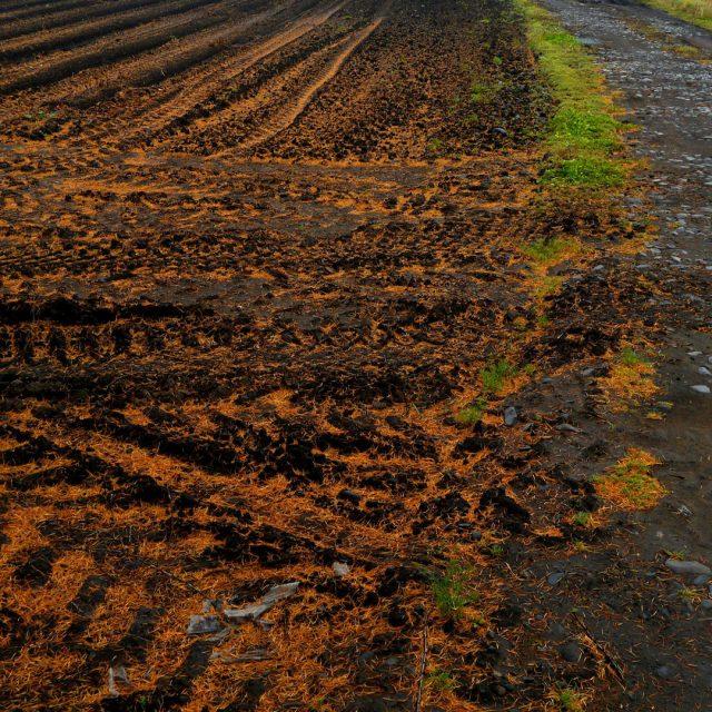 Este año se mantiene en Galicia el sistema de abanico para esparcir purines