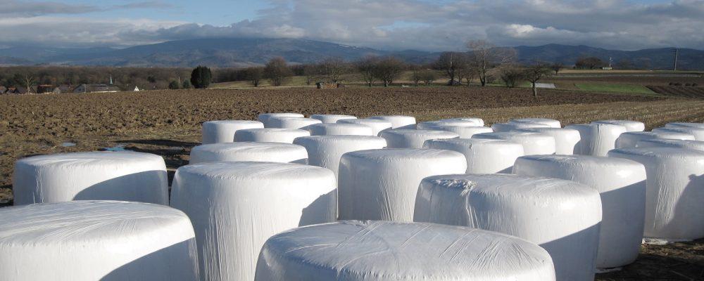 Donadas 35 toneladas de hierba para una ganadería afectada por el fuego