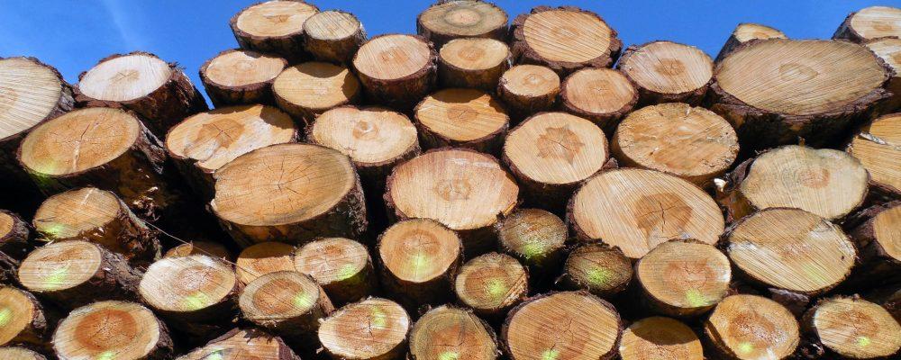Se crea la Agencia Gallega de la Industria Forestal