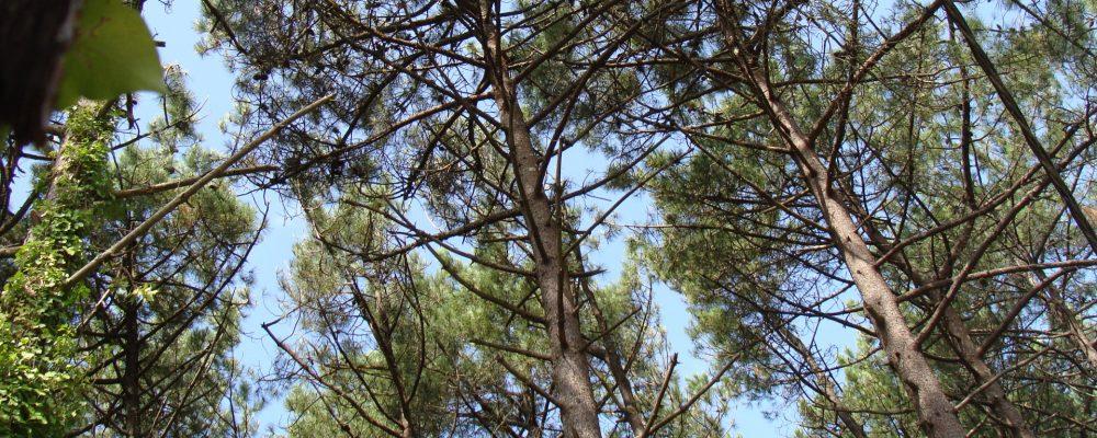 Un repaso a los principales datos del sector forestal