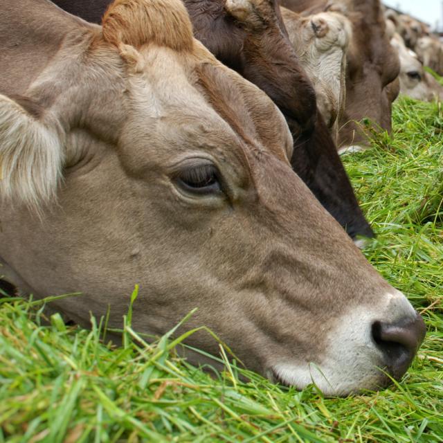 Ayudas para el asesoramiento de las explotaciones agrícolas y ganaderas