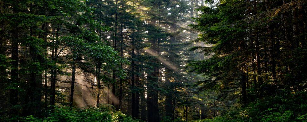 4 millones  de euros para proyectos de ordenación de montes