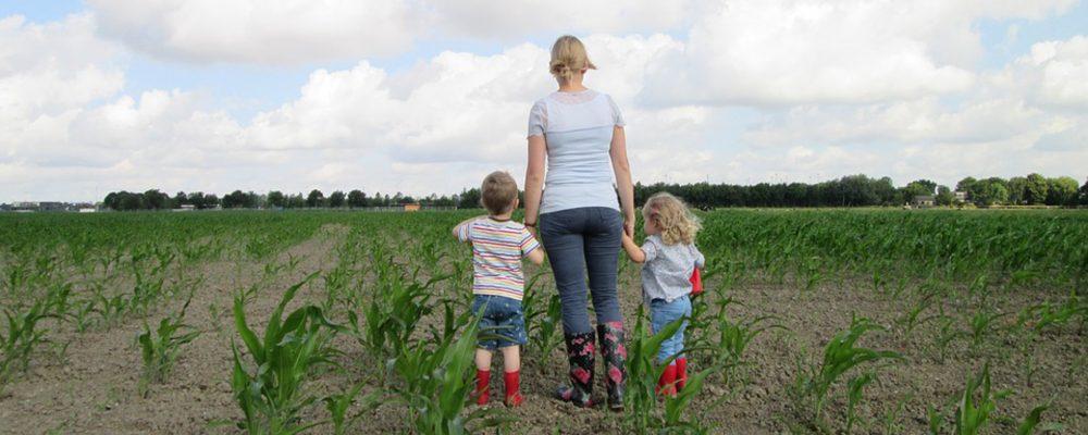 Ayudas para mejorar explotaciones agrarias e incorporar jóvenes al campo