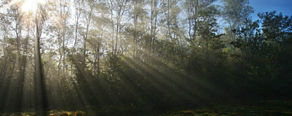 ¿Cómo reducir las consecuencias de los incendios forestales?