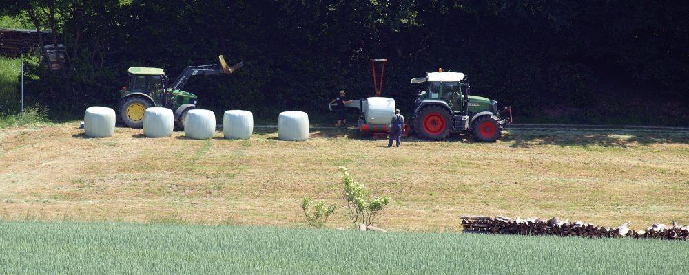 Menos cantidad y calidad en la campaña de ensilado de hierba de este año