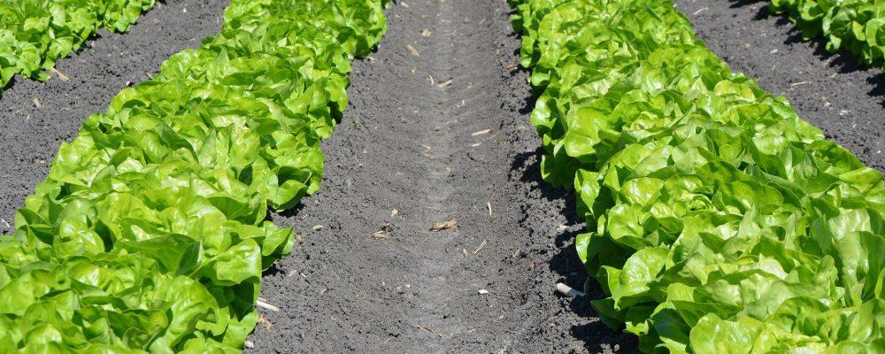 ¿Por qué es tan importante la rotación de cultivos?