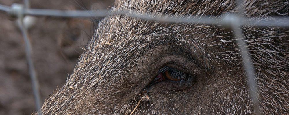 Publicado el listado de beneficiarios de las ayudas para prevenir daños de la fauna salvaje