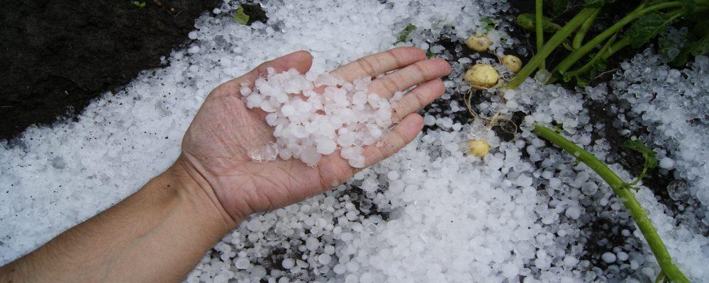 Ayudas para productores de uva, castaña y patatas afectadas por las heladas y el granizo
