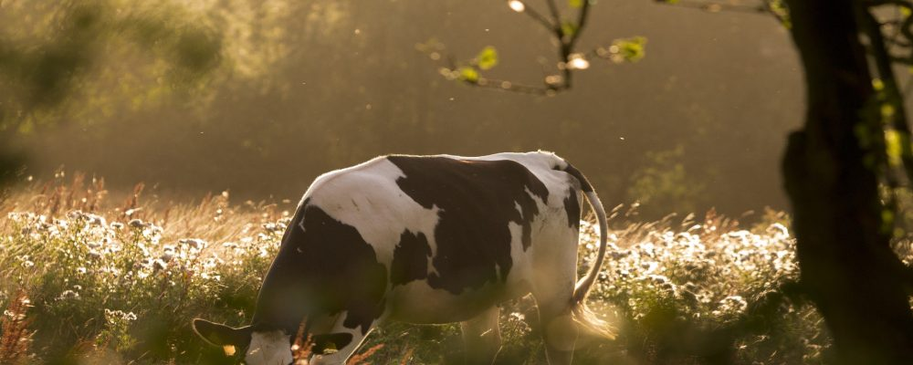 Curso sobre mejora de la eficiencia de la ración en vacuno de leche: Método Obsalim