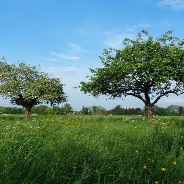 La Diputación de Lugo prepara una línea de ayudas para la recuperación de tierras abandonadas
