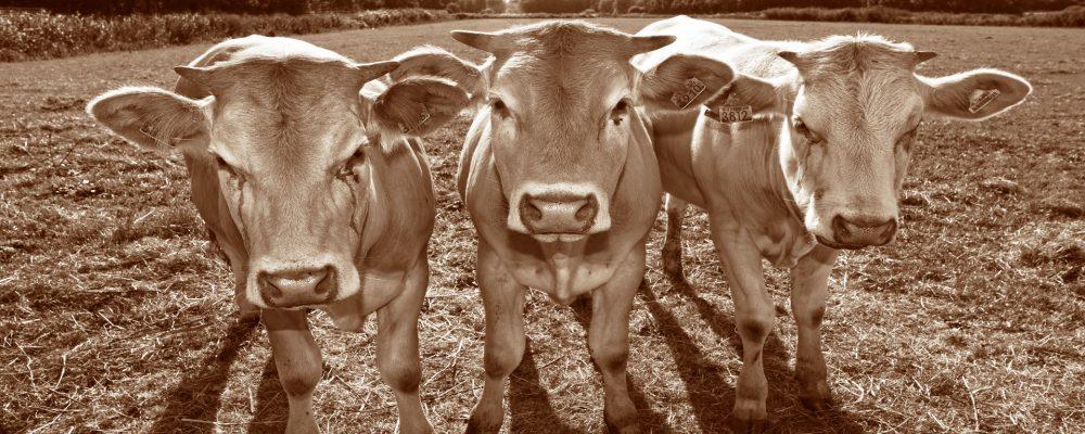 Los ganaderos no deben comprar medicamentos sin receta y menos decidir los tratamientos