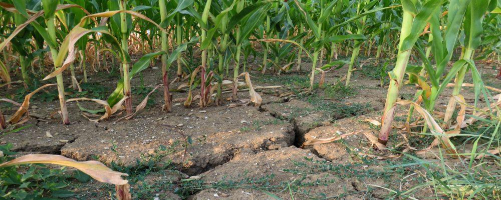Se solicita la convocatoria de la Mesa de la Sequía