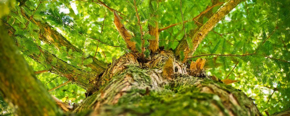La Xunta aprobará un plan estratégico para el sector forestal en 2018