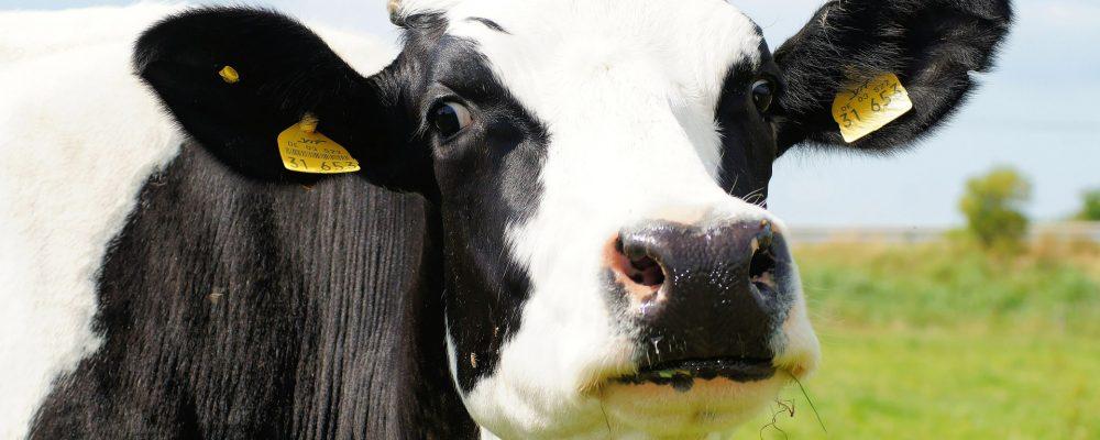 Recomendaciones para mejorar la gestión de una ganadería de vacuno de leche