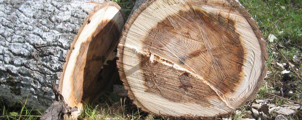 Se necesita agilizar los permisos de tala