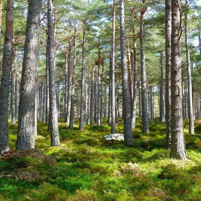 Bases del II premio al Proyecto Innovador Forestal 2018