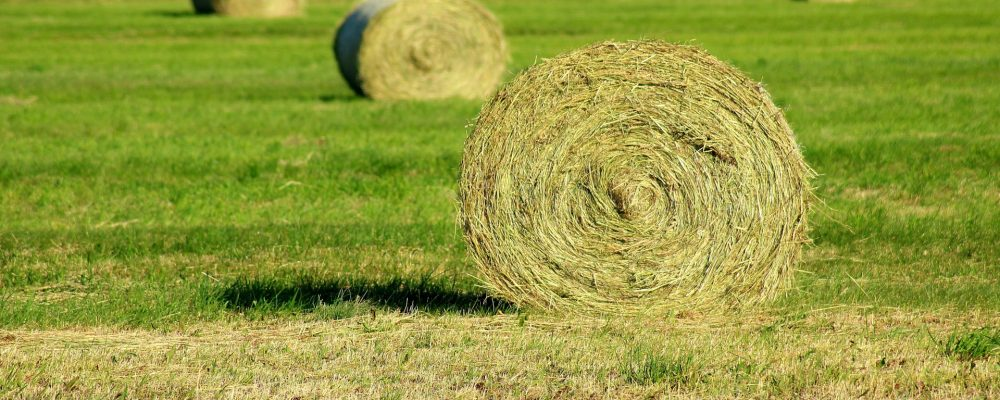 El Fondo Español de Garantía Agraria hizo público estos días el listado de beneficiarios de las ayudas de la Política Agraria Común (PAC) en el 2017.