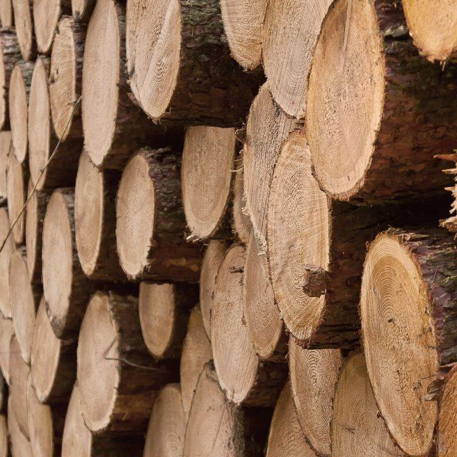 Cursos sobre certificación forestal organizados por la AFG