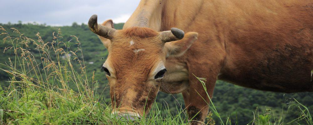 La European Dairy Farmers, el club privado de ganaderías de toda Europa