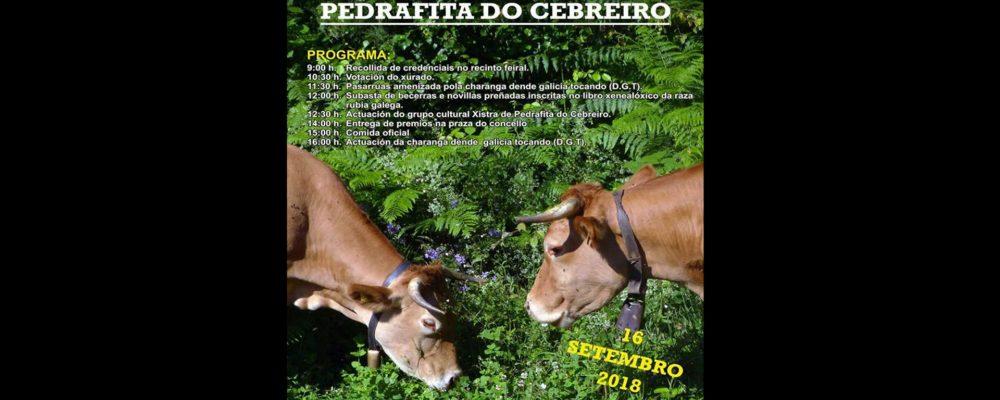 XXX Certame – Exposición de gando vacún de PEDRAFITA DO CEBREIRO