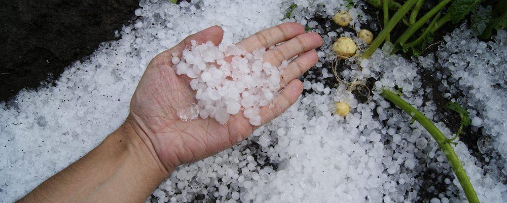 Ayudas a agricultores afectados por fenómenos climáticos