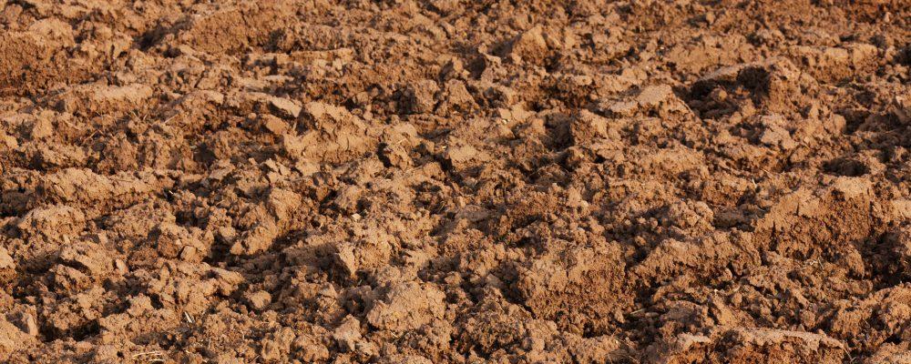 ¿Cuáles son los principales efectos de la contaminación agrícola?