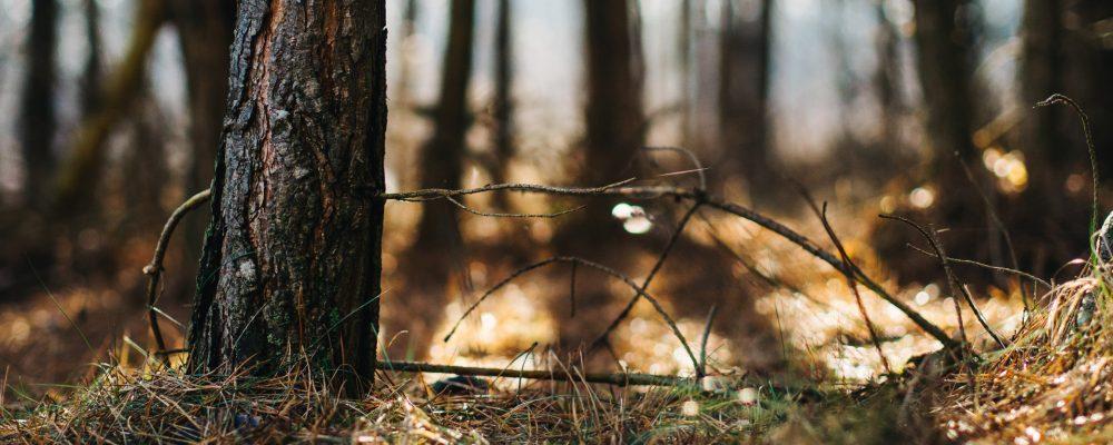 El 72% de los incendios forestales de España se producen en Galicia