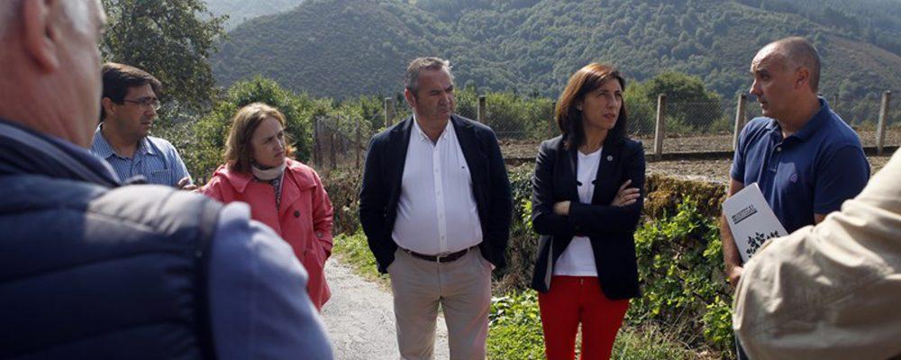 Galicia cuenta ya con cinco sociedades de fomento forestal