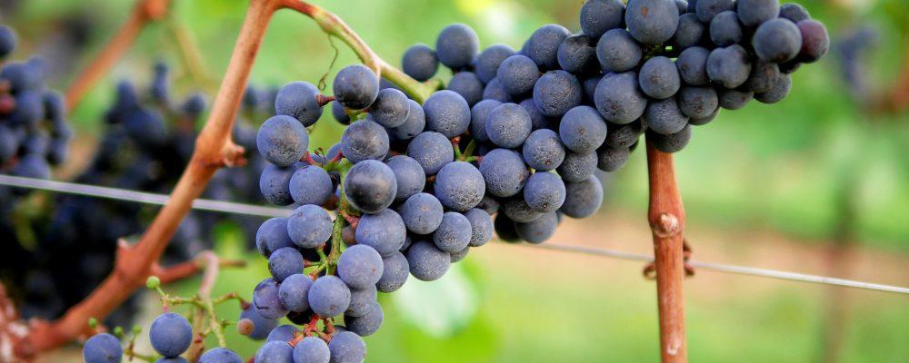 Grandes beneficios de la vinoterapia para la piel y el bienestar
