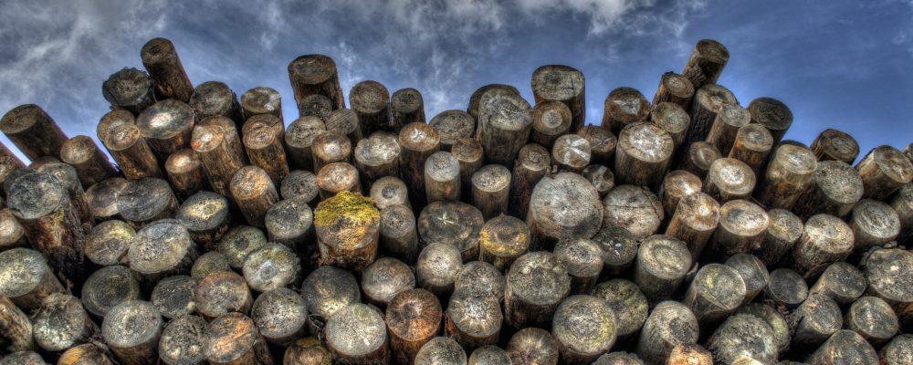 Nace la Axencia Galega da Industria Forestal, que velará por la salud del sector
