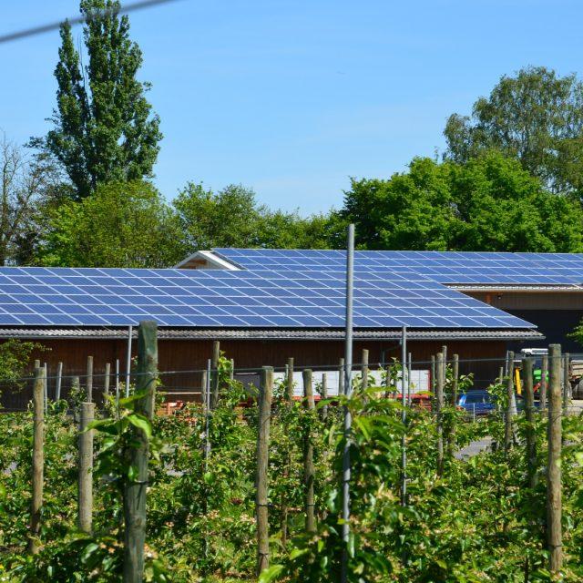 Instalar energías renovables en las explotaciones ganaderas
