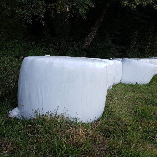 La enfermedad relacionada con la inhalación de hongos de los silos de hierba: El pulmón del granjero