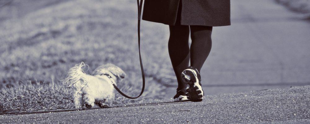 Los perros y su sexto sentido