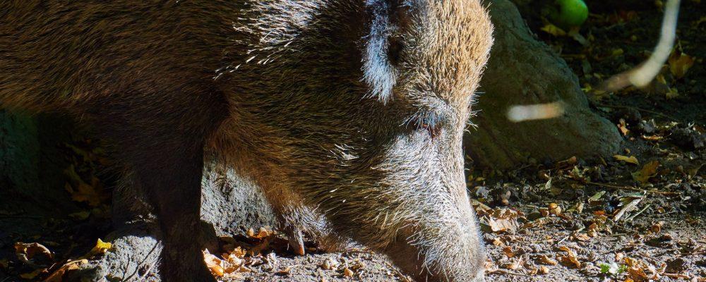 Ayudas para prevenir daños causados por fauna silvestre en explotaciones agrícolas y ganaderas