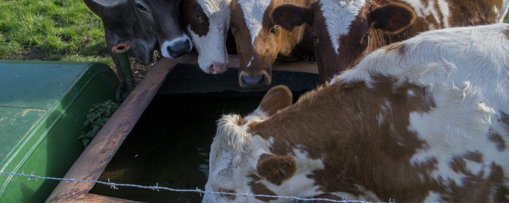 Beneficiarios de las ayudas para el suministro de agua a las ganaderías