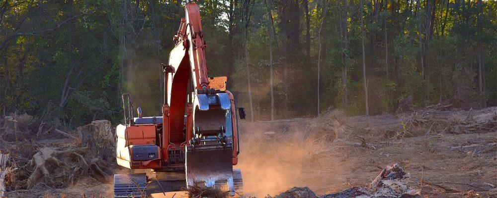 Cambios en la normativa forestal para el 2019