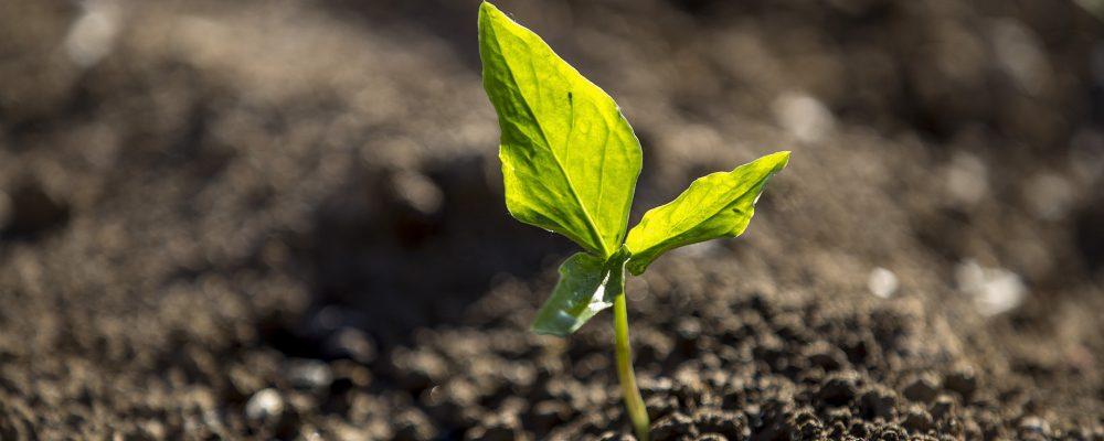 Convocadas ayudas para apoyar a las explotaciones agrícolas de producción vegetal