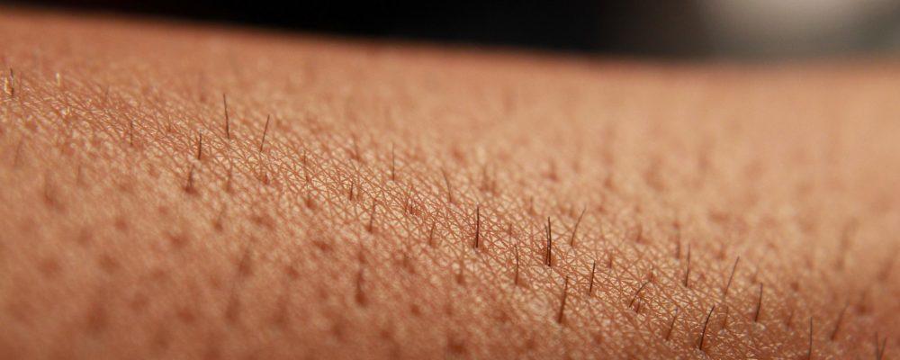 Desarrollado un método para producir piel con pelo
