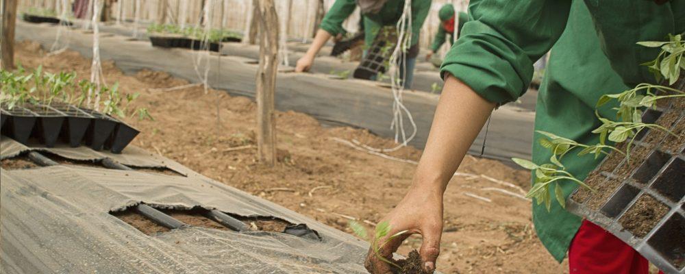 Detalles sobre el «Paquete Joven» para jóvenes agricultores y mujeres