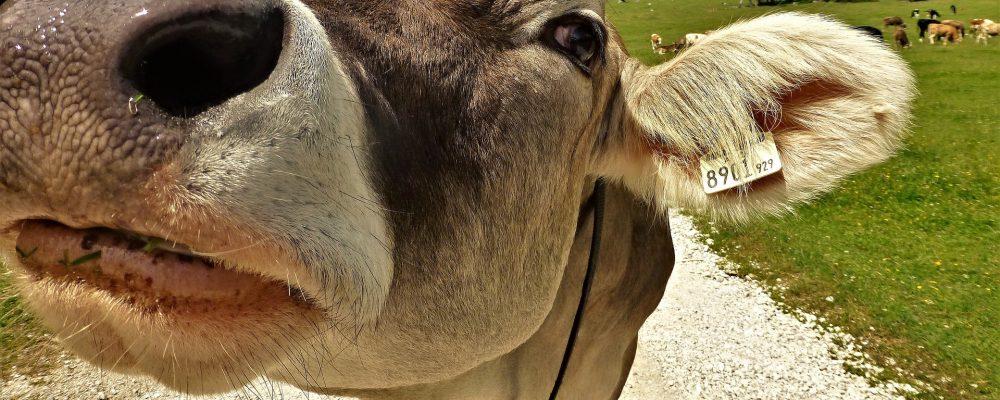 El programa «Erasmus Agrarios» fomentará visitas de agricultores y ganaderos a países de la UE