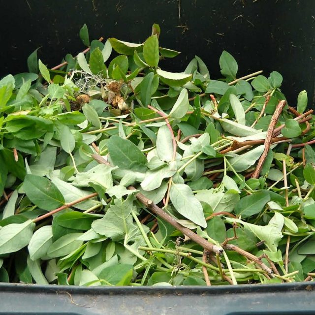 La provincia de Pontevedra impulsa el compostaje reduciendo el volumen de basura